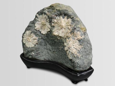 菊花石を買取いたします。